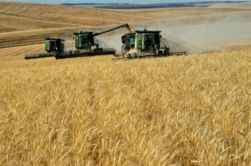 ЕС, зърно, Agrozona.bg