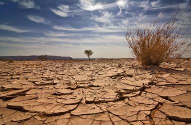 Cracked desert dry tree