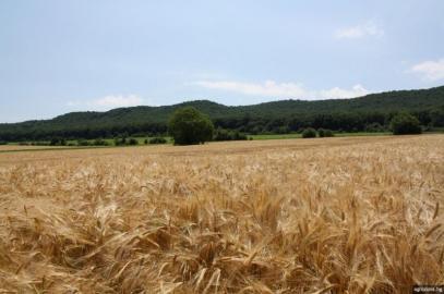 Увеличават се площите с пшеница и ечемик в Пернишка област
