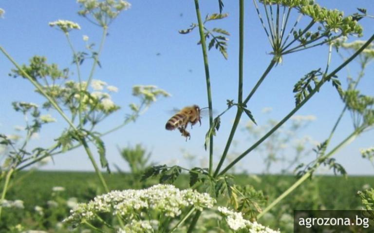 пчели, третиране, Agrozona.bg