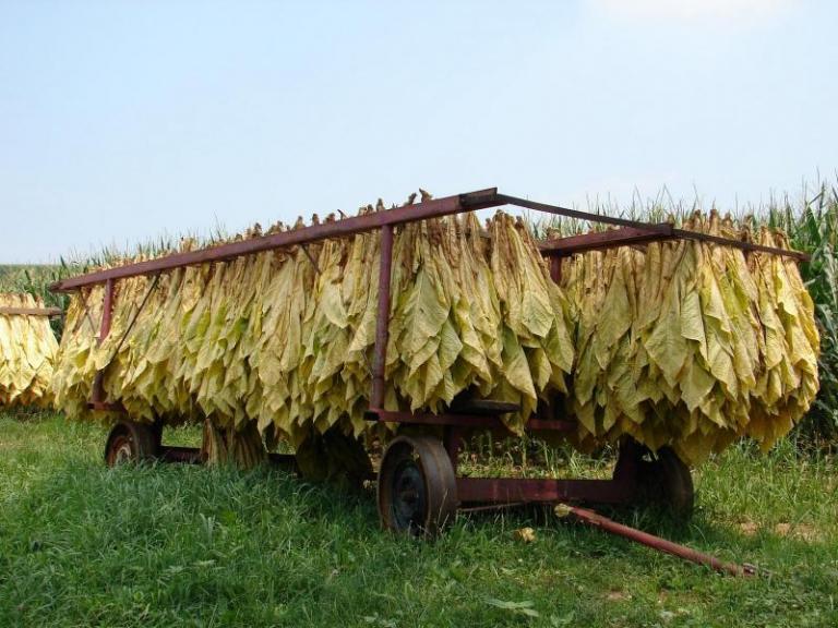 държавна помощ, тютюнопроизводители, Agrozona.bg