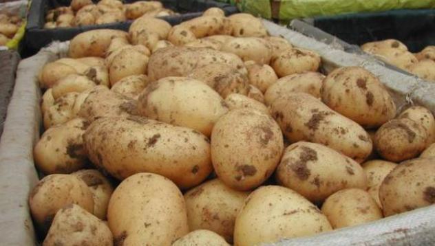 Бачковски манастир, картофи, Agrozona.bg