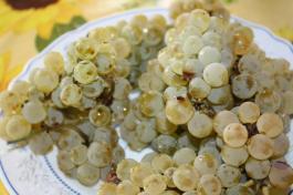 грозде за вино