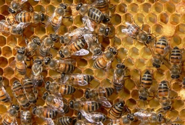 подвижно пчеларство, пчели, Agrozona.bg