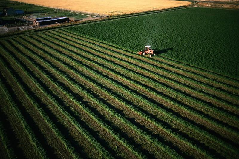 Alfalfa Hay Harvest