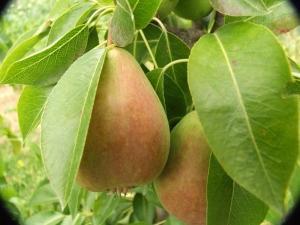 бъбреци, витамин, Agrozona.bg