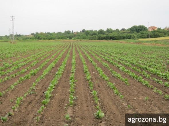 зеленчукови култури, околна среда, Agrozona.bg