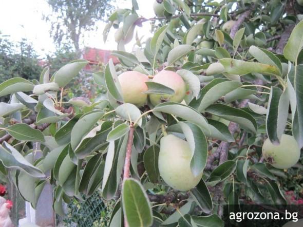 биопрозводство, инвестиции, Agrozona.bg