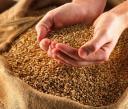 Износът на руски зърнени култури достигна 52 млн. тона