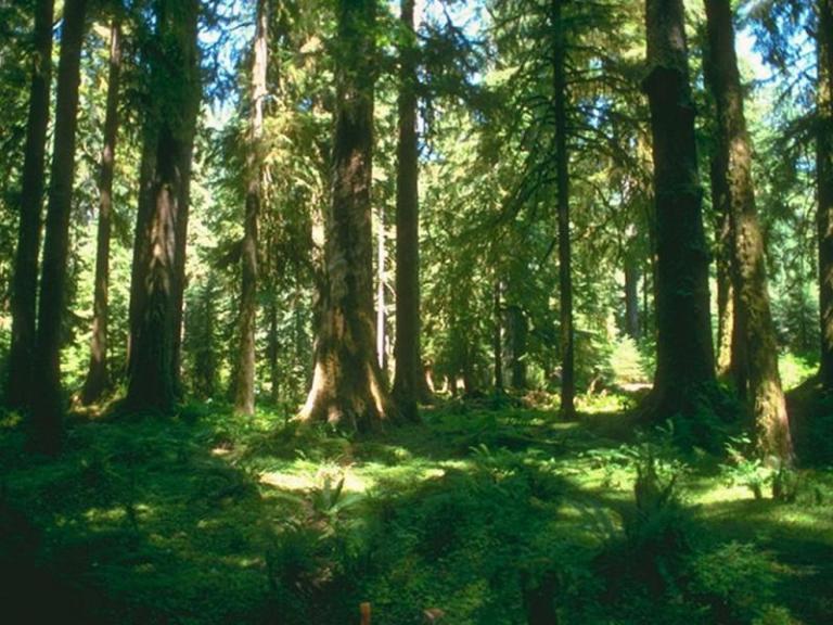 дървесина, ИАГ, Agrozona.bg
