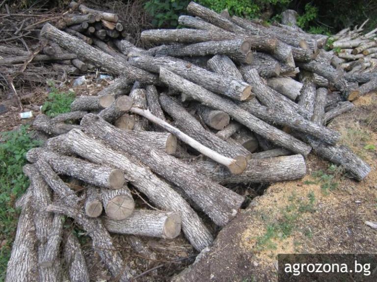 горско стопанство, нарушения, Agrozona.bg