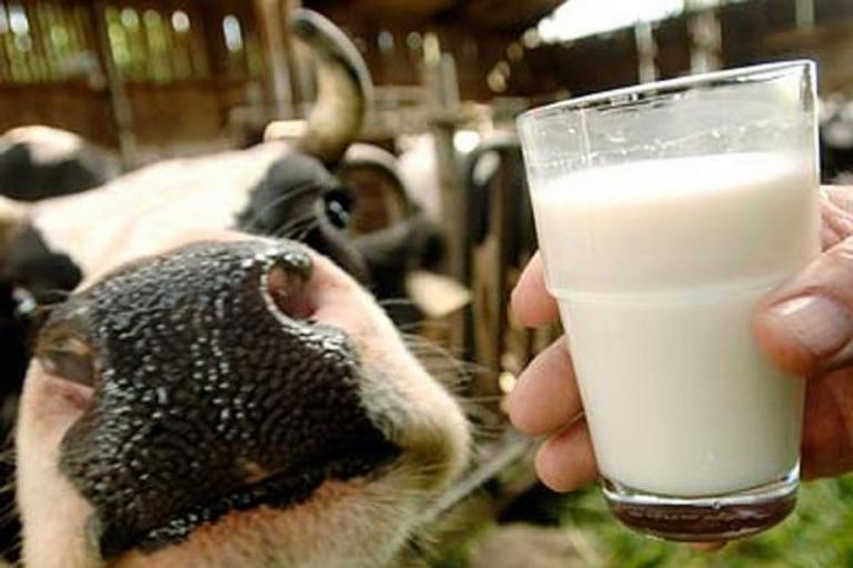 Бойко Синапов, мляко, Agrozona.bg