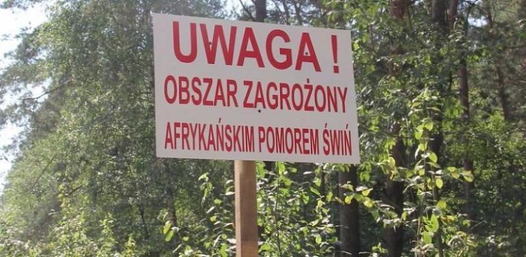 АЧС, свине, Agrozona.bg