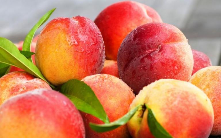 вишни, добиви, Agrozona.bg