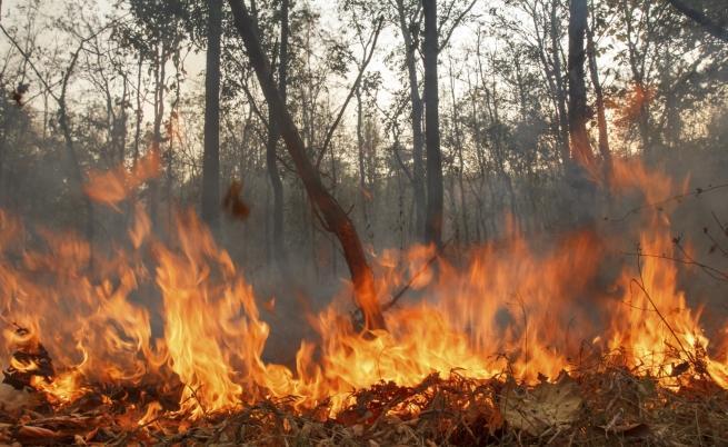бракониери, гори, Agrozona.bg