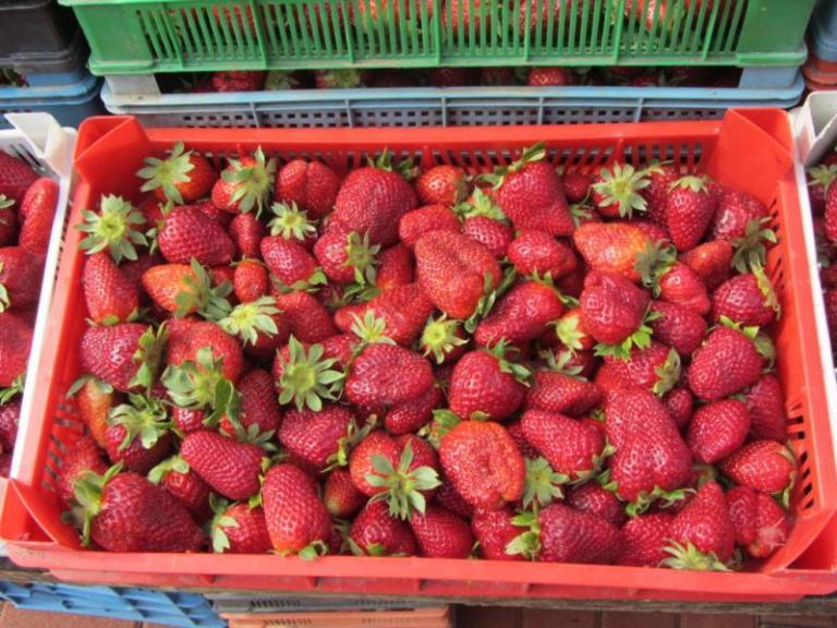 зеленчуци, плодове, Agrozona.bg