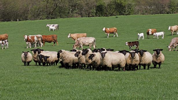 животни, животновъдство, Agrozona.bg