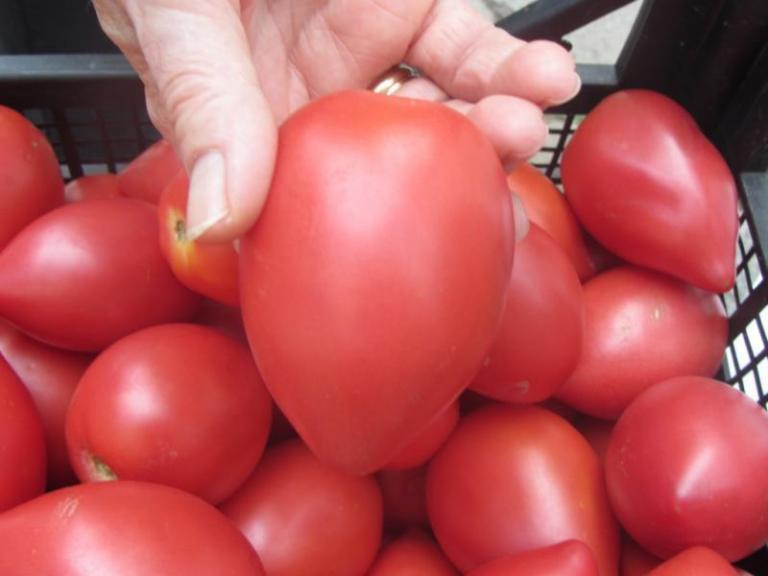 домати, краставици, Agrozona.bg
