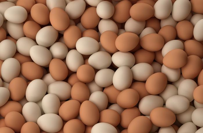 кокошки, люпилни, Agrozona.bg