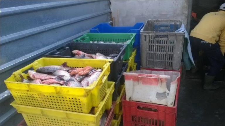 ИАРА, иззета риба, Agrozona.bg