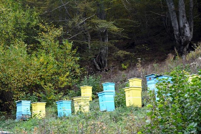 кошери, подвижни пчелини, Agrozona.bg
