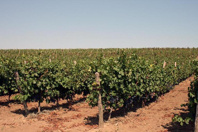 Застраховане на реколтата, застрахователно обезщетение, Agrozona.bg
