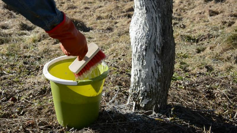 варосване боядисване дърво