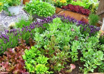 лавандула и зеленчуци