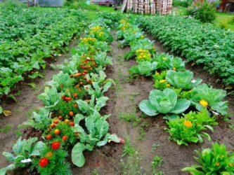 цветя и зеленчуци