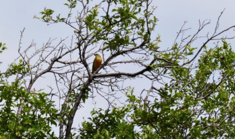 Европейски дни на птиците, птици, Agrozona.bg