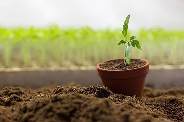 засаждане, качествени семена, Agrozona.bg
