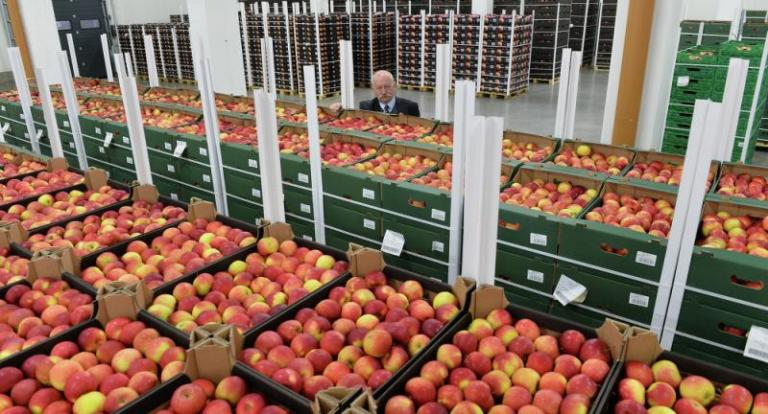 iabalki v ceh apples -agrozona-bg