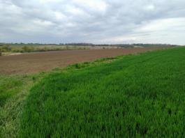 поле земя нива