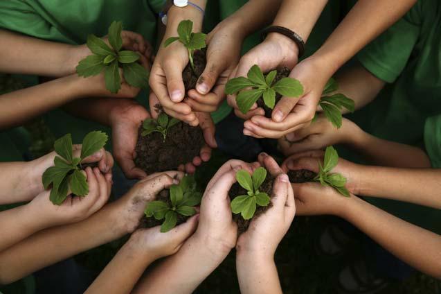 градинарство, градини в училище, Agrozona.bg