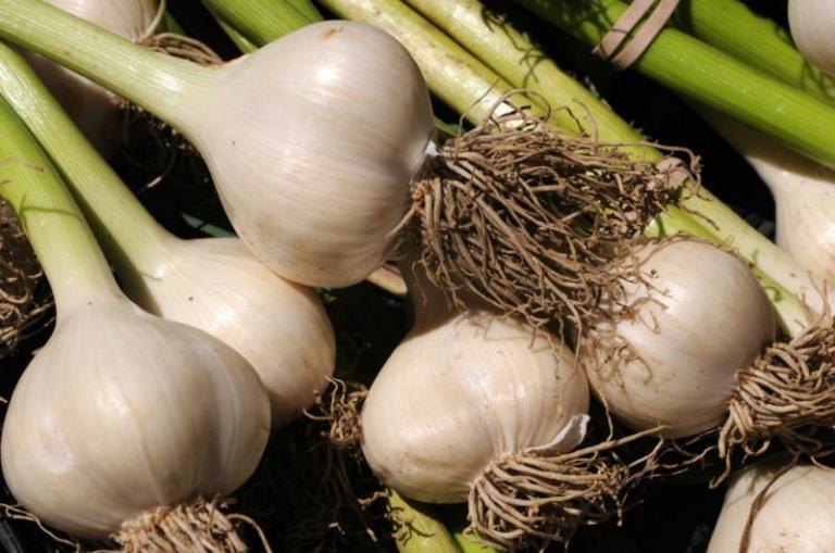 картофи, лук, Agrozona.bg