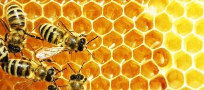 Във Враца ще пръскат, затворете пчелите