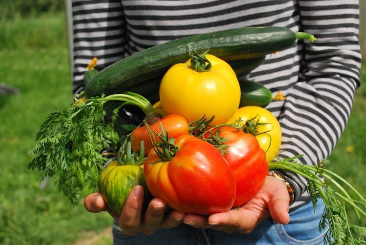 зеленчуци градина