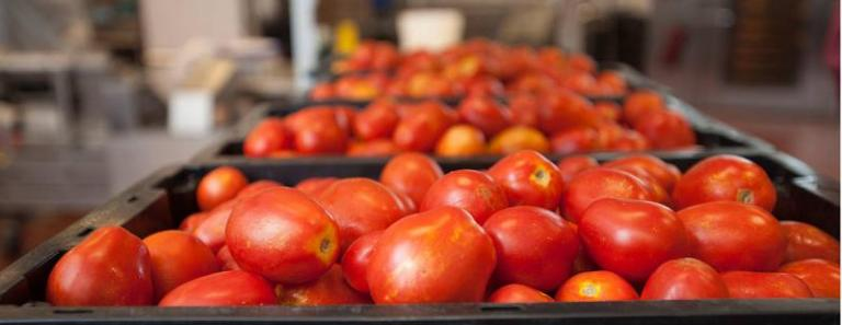 преработвателна промишленост, пресни зеленчуци, Agrozona.bg