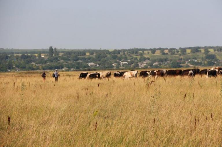ДФЗ, земеделски стопани, Agrozona.bg