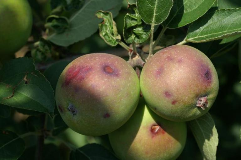 агрометеорологична прогноза, влагозапаси, Agrozona.bg