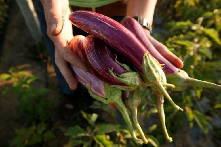 производители на плодове и зеленчуци, разходи на фермери, Agrozona.bg