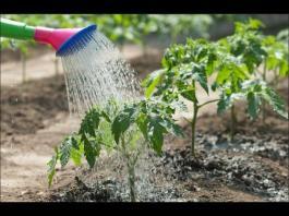 йод в градината 2 препарати за растителна защита