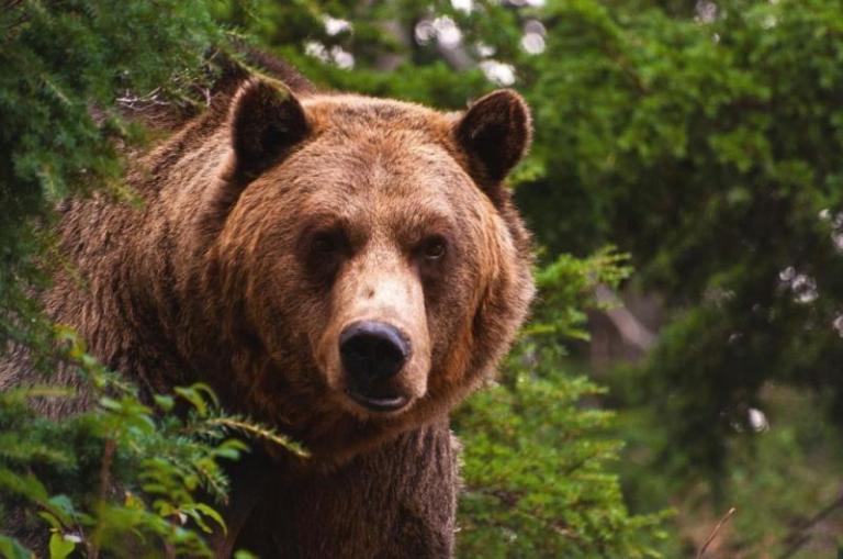 WWF, мечки, Agrozona.bg