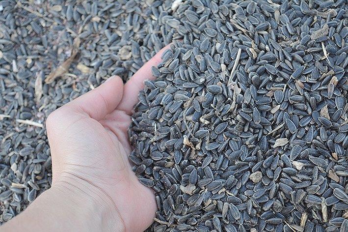 пшеница, средна цена, Agrozona.bg