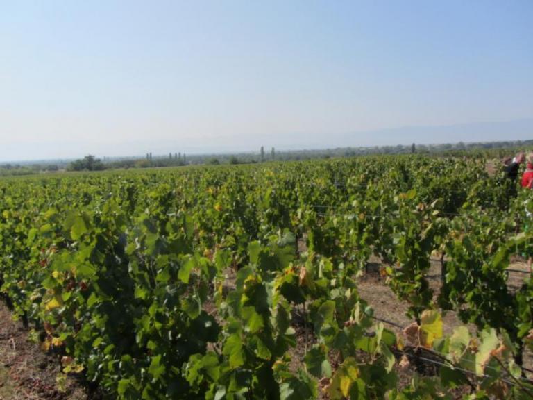 Застраховане на реколтата, Agrozona.bg