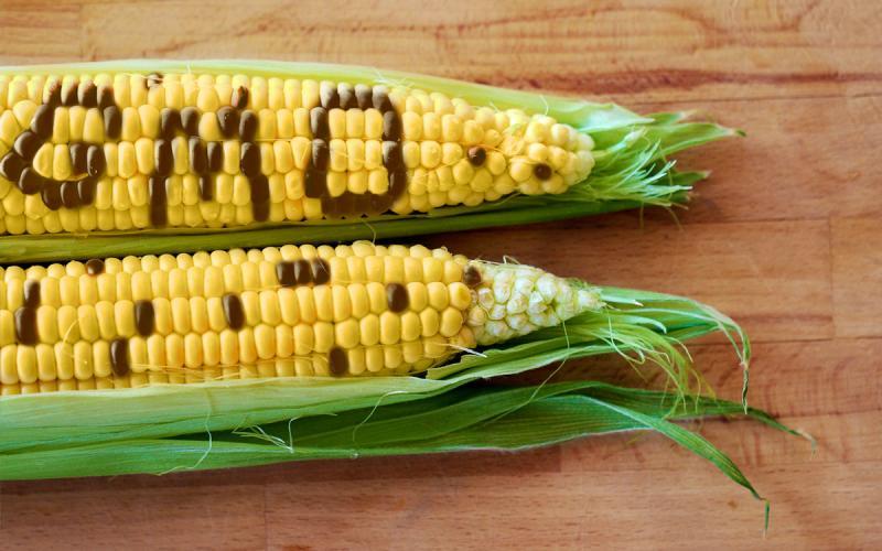 ГМО, Agrozona.bg