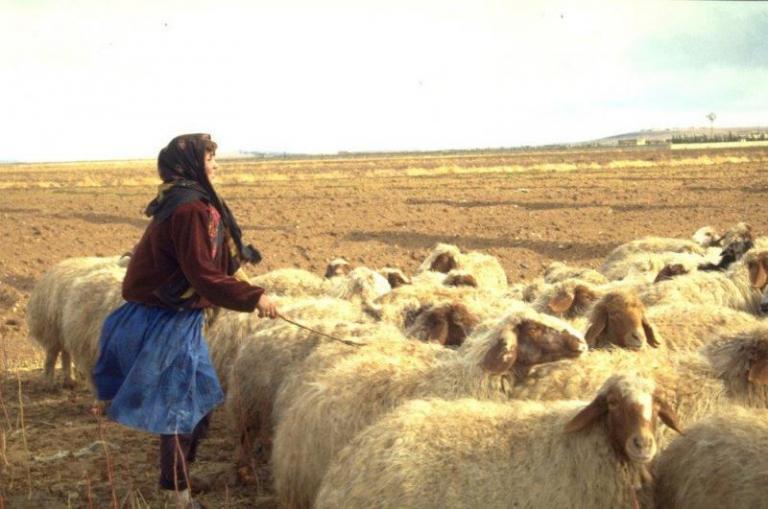 месо, овце, Agrozona.bg