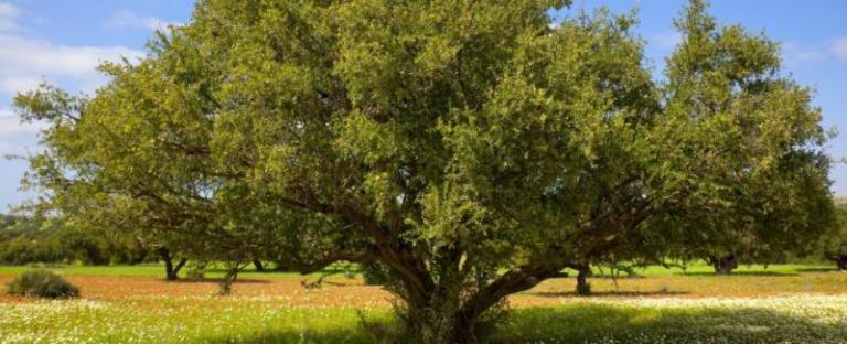 дървета, защитени, Agrozona.bg