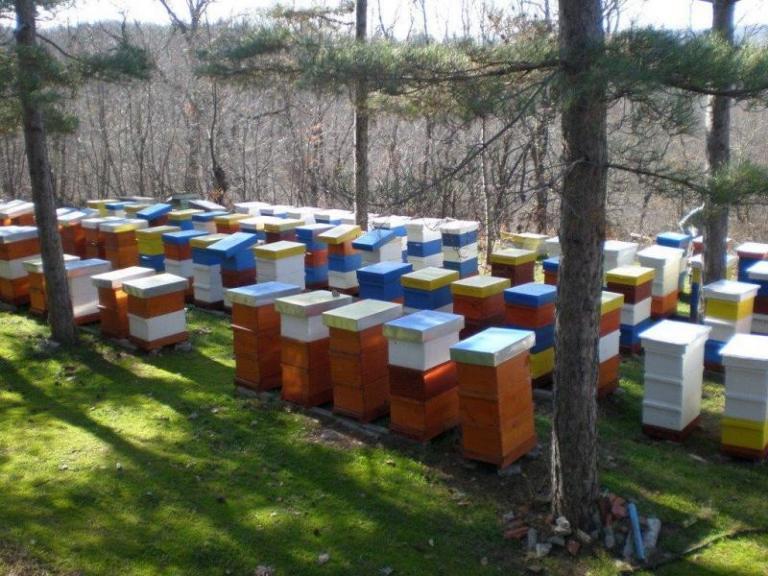 мед, продажби на мед, Agrozona.bg