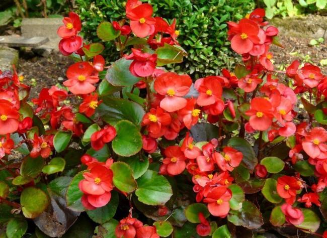 До 20 октомври продължават есенните срещи с цветята в градината на БАН